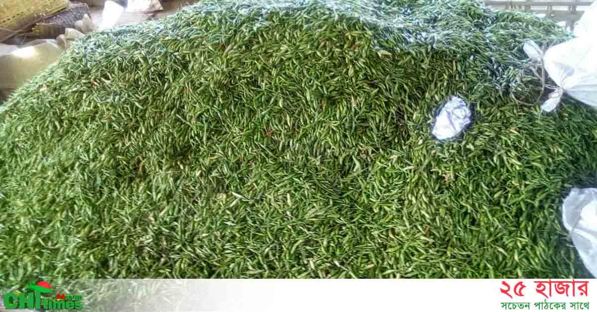 রাজস্থলীতে 'ধান্য মরিচ' এর বাম্পার ফলন